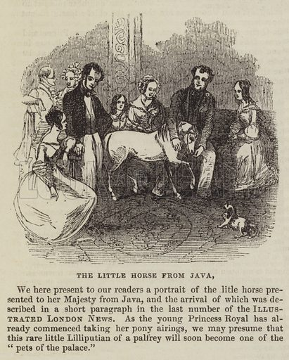 The Little Horse from Java. Illustration for The Illustrated London News, 13 August 1842.