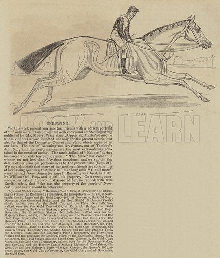 Beeswing. Illustration for The Illustrated London News, 24 September 1842.
