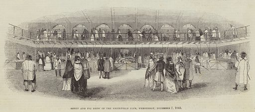 Sheep and Pig Show of the Smithfield Club, Wednesday, 7 December 1842. Illustration for The Illustrated London News, 10 December 1842.