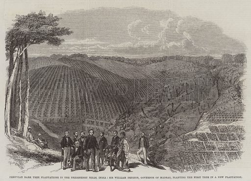 Peruvian Bark Tree Plantations in the Neilgherry Hills, India, Sir William Denison, Governor of Madras, planting the First Tree in a New Plantation. Illustration for The Illustrated London News, 6 December 1862.