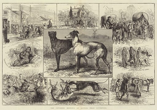 The Coursing Meeting at Altcar, near Liverpool. Illustration for The Illustrated London News, 26 February 1881.