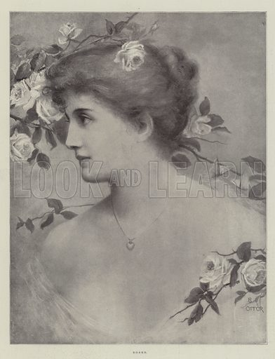 Roses. Illustration for The Illustrated London News, 15 July 1899.