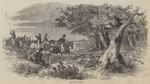The Royal Hounds. Illustration for The Pictorial Times, 21 November 1846.