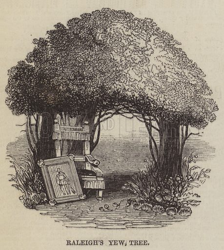 Raleigh's Yew Tree. Illustration for The Pictorial Times, 21 November 1846.