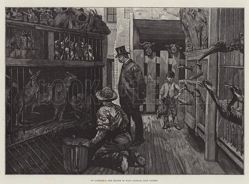 At Jamrach's, the Dealer in Wild Animals, East London. Illustration for The Illustrated London News, 19 February 1887.