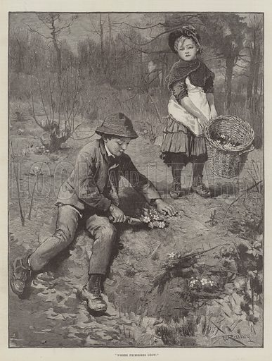 Where Primroses Grow. Illustration for The Illustrated London News, 19 March 1887.