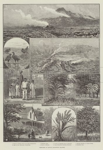 Sketches in Hawaii (Sandwich Islands). Illustration for The Illustrated London News, 8 December 1888.