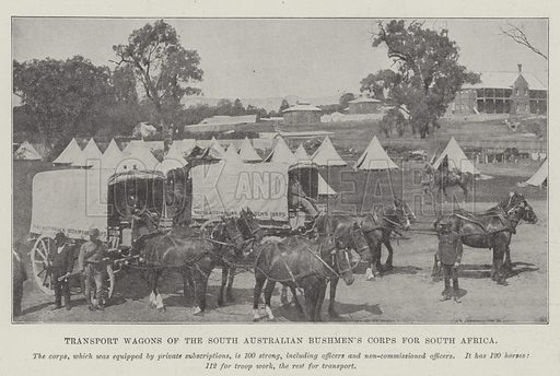 Transport Wagons of the South Australian Bushmen's Corps for South Africa. Illustration for The Illustrated London News, 30 June 1900.