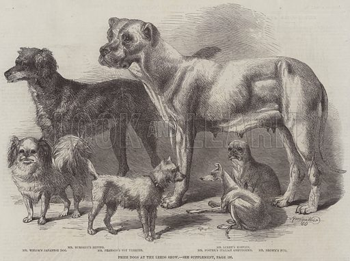 Prize Dogs at the Leeds Show. Illustration for The Illustrated London News, 3 August 1861.