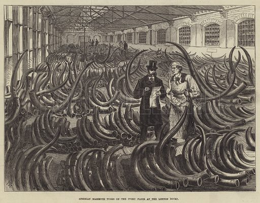 Siberian Mammoth Tusks on the Ivory Floor at the London Docks