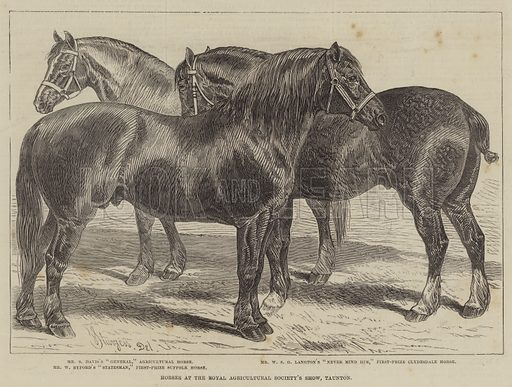 Horses at the Royal Agricultural Society's Show, Taunton. Illustration for The Illustrated London News, 24 July 1875.