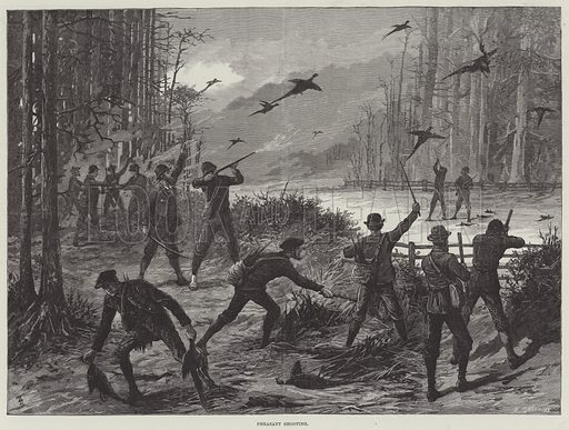 Pheasant Shooting. Illustration for The Illustrated London News, 11 October 1884.