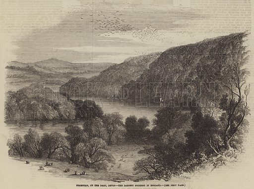 Sharpham, on the Dart, Devon, the Largest Rookery in England. Illustration for The Illustrated London News, 10 May 1856.