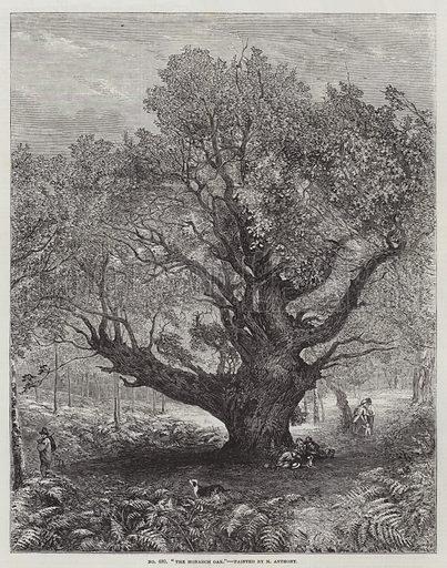 The Monarch Oak
