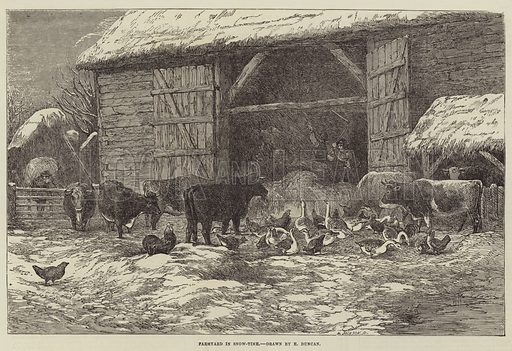 Farmyard in Snow-Time. Illustration for The Illustrated London News, 20 January 1855.