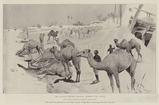 The Advance towards Dongola, watering the Camels. Illustration for The Illustrated London News, 27 June 1896.