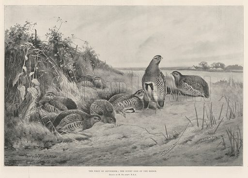 The First of September, the Sunny Side of the Hedge. Illustration for The Illustrated London News, 31 August 1901.