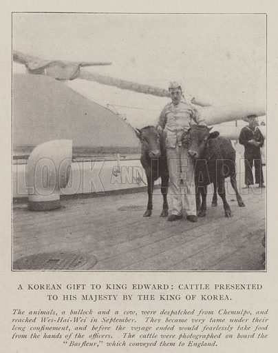 A Korean Gift to King Edward, Cattle presented to His Majesty by the King of Korea. Illustration for The Illustrated London News, 11 January 1902.