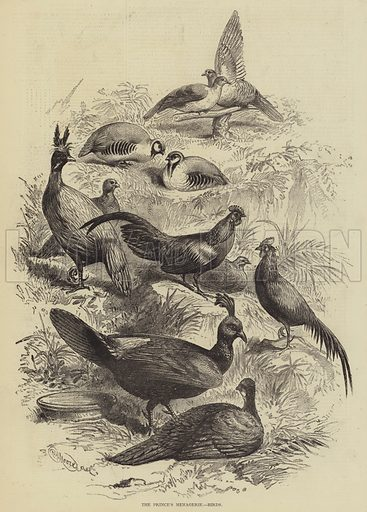 The Prince's Menagerie, Birds. Illustration for The Illustrated Sporting and Dramatic News, 20 May 1876.
