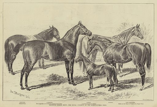 Islington Horse Show, the Royal Exhibits at the Agricultural Hall. Illustration for The Illustrated Sporting and Dramatic News, 17 June 1876.
