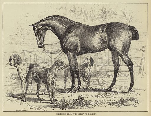 Sketches from the Show at Boston. Illustration for The Illustrated Sporting and Dramatic News, 8 July 1876.