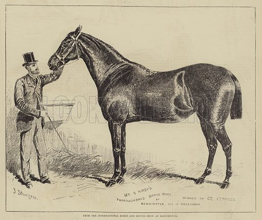 From the International Horse and Hound Show at Manchester. Illustration for The Illustrated Sporting and Dramatic News, 12 August 1876.