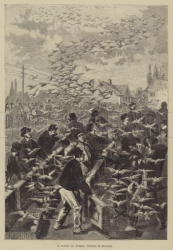 A Flight of Homing Pigeons in Belgium. Illustration for The Illustrated Sporting and Dramatic News, 2 September 1876.