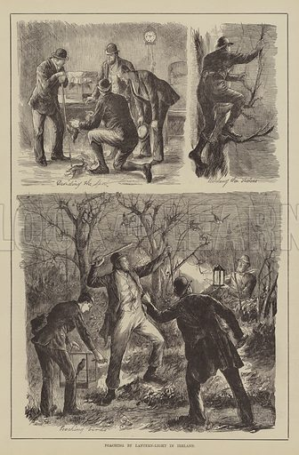 Poaching by Lantern-Light in Ireland. Illustration for The Illustrated Sporting and Dramatic News, 20 November 1880.