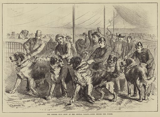 The Kennel Club Show at the Crystal Palace, going before the Judges. Illustration for The Illustrated Sporting and Dramatic News, 12 July 1884.