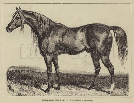 Wellington, picture, image, illustration