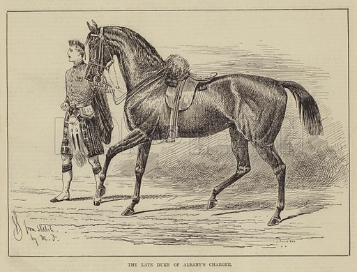 The late Duke of Albany's Charger. Illustration for The Illustrated Sporting and Dramatic News, 12 April 1884.