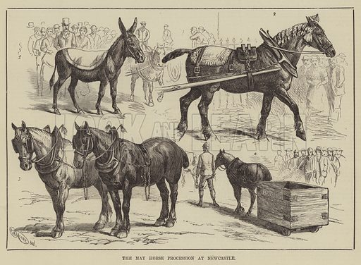 The May Horse Procession at Newcastle. Illustration for The Illustrated Sporting and Dramatic News, 17 May 1884.