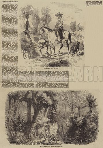 Sketches from a Cuban Plantation. Illustration for the Illustrated Times, 25 February 1860.