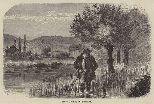 Leech Fishing in Brittany. Illustration for The Illustrated News of the World, 26 May 1860.