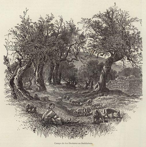 Campo de los Pastores en Bethlehem. Illustration from El Mundo Ilustrado.