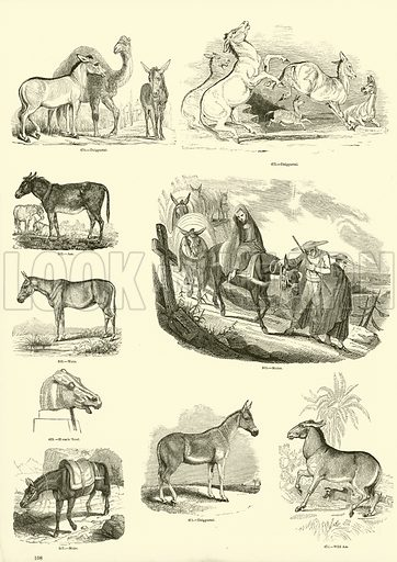 Illustration for The Pictorial Museum of Animated Nature (Charles Knight, c 1850).