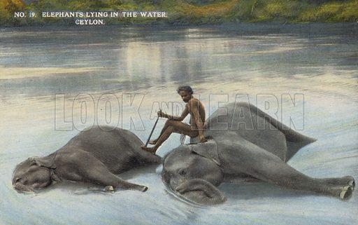 Elephants lying in the Water, Ceylon