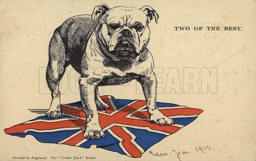 British bulldog standing on the union flag