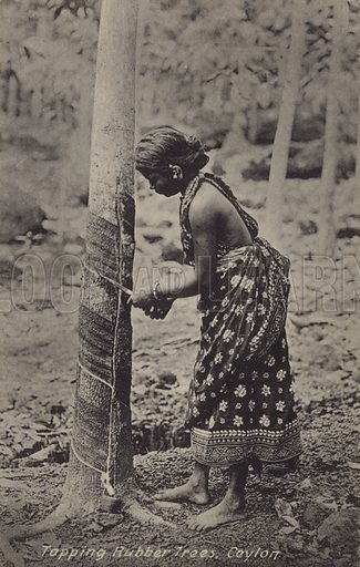 Tapping rubber trees, Ceylon. English postcard from the early twentieth century.