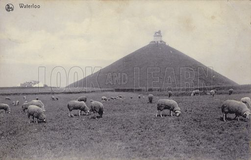Postcard depicting sheep grazing in the fields of Waterloo, Belgium, with the Lion's Mound, a monument to the Battle of Waterloo, rising beyond.
