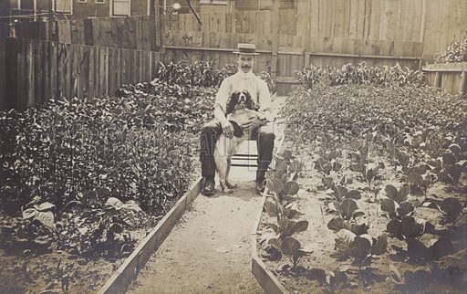 Photograph of man in his garden with his dog surrounded by vegetables.