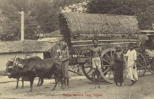 Native bullock cart in Ceylon.