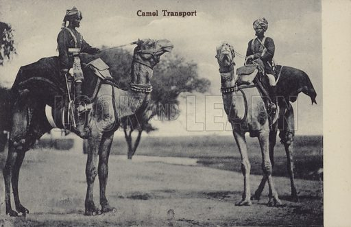 Camel transport in India.