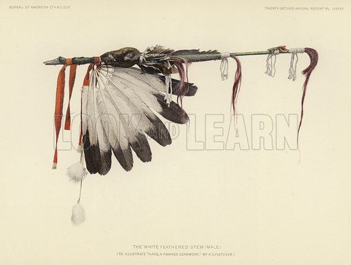The white feathered stem (male). Illustration for an article on The Hako: A Pawnee Ceremony by Alice C Fletcher, assisted by James R Murie, music transcribed by Edwin S Tracy. From the Twenty-second Annual Report of the Bureau of American Ethnology to the Secretary of the Smithsonian Institution, 1900–01 by JW Powell, Director. In Two Parts – Part 2 (Washington, Government Printing Office, 1904).