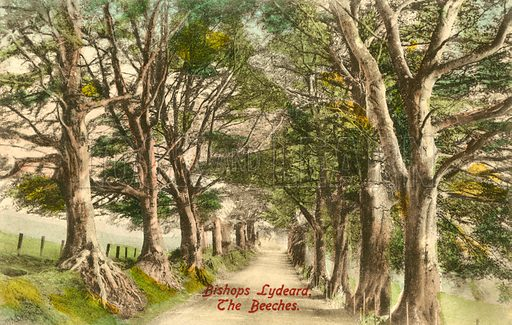 Bishops Lydeard, the Beeches. Postcard, early 20th century.
