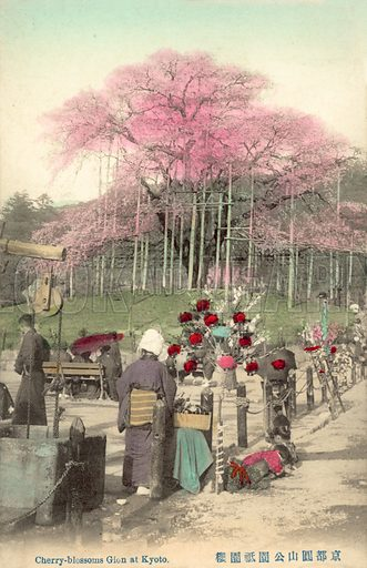 Cherry Blossoms, Gion, Kyoto, Japan