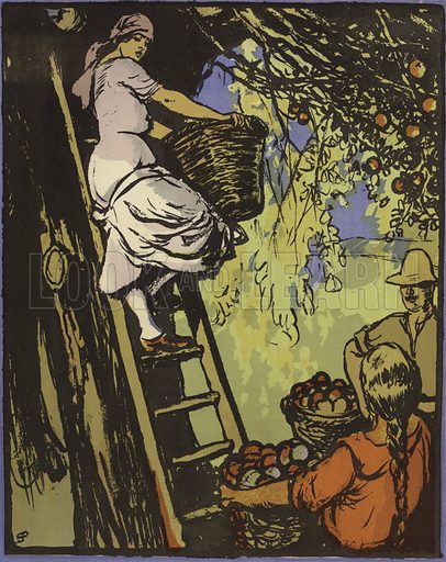 Picking fruit in an orchard, New Zealand. Illustration from The Pageant of Empire, by E V Lucas (Fleetway Press, Ltd, London, 1924).