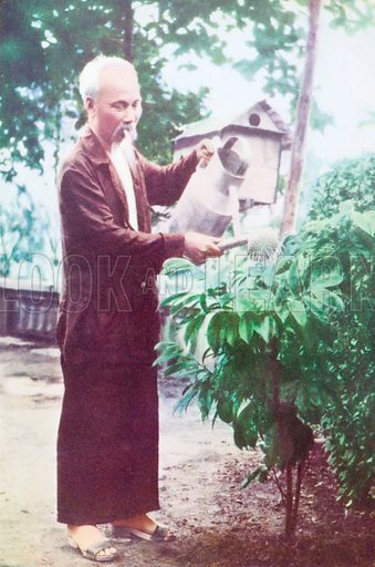 Vietnamese communist revolutionary leader Ho Chi Minh (1890-1969) watering plants in his garden.