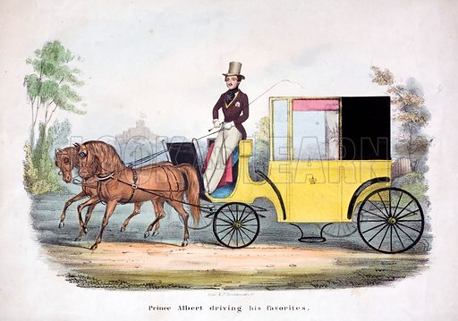 Prince Albert driving a carriage, 19th Century.