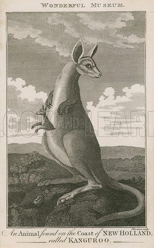 Portrait of a kangaroo